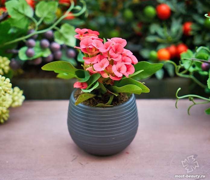 Самые красивые комнатные цветы: фото и названия