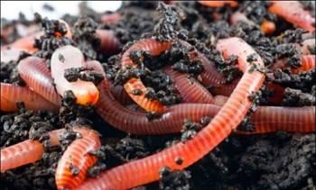Разведение червей и производство биогумуса как бизнес
