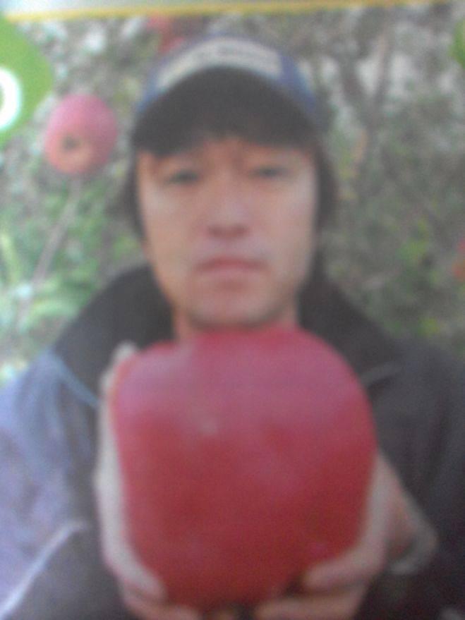 Самое большое яблоко в мире: фото — selok.info
