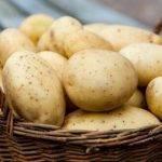 Вреден ли картофель для здоровья и фигуры