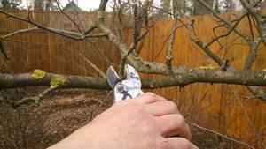 Обрезка яблонь осенью: схемы, когда нужно обрезать, видео для начинающих