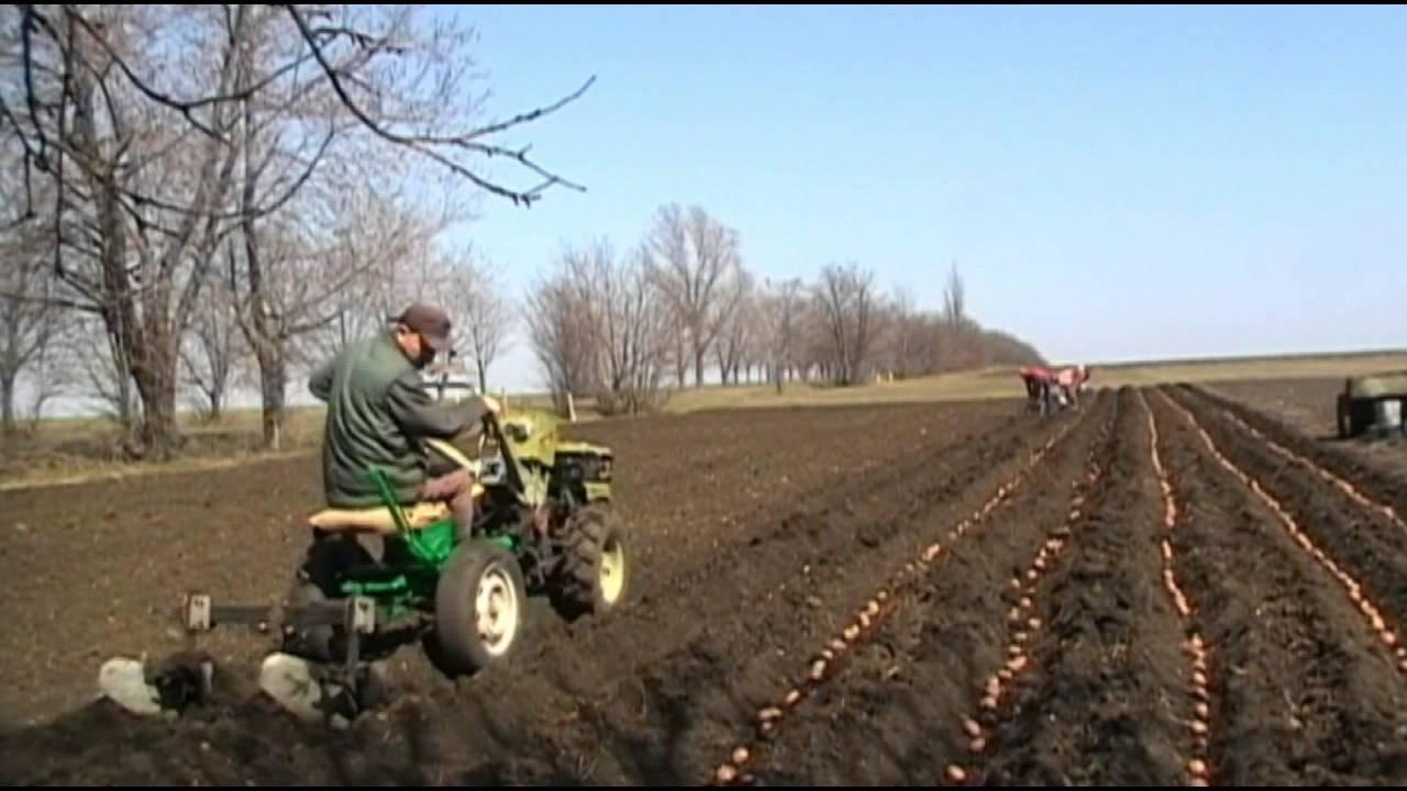 Посадка картофеля мотоблоком с окучником видео - моё село