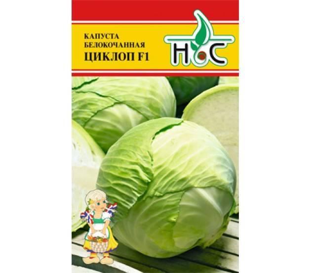 Самые крупные сорта белокочанной капусты: топ-5
