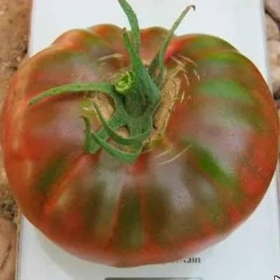 Томат «черный крым» или «черный крымский»: описание сорта, фото и рекомендации по выращиванию помидоры