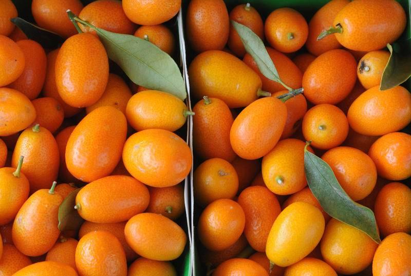 Кумкват: что это за фрукт с фото, как его вырастить в домашних условиях?
