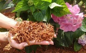 Опилки как удобрение, как применять, как готовить компост из опилок