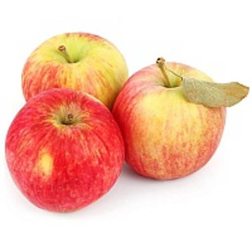 Яблоня штрифель: описание, фото, отзывы
