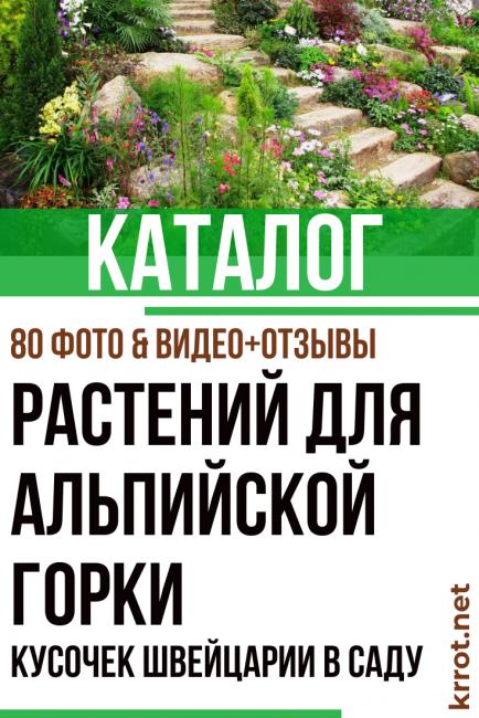 Какие растения и цветы для альпийской горки, альпинария, рокария и каменистого сада