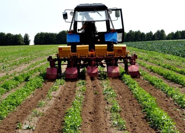 Как посадить картофель по голландской технологии. видео