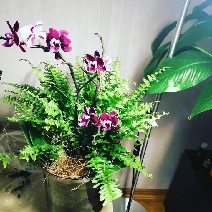 Корни папоротника для орхидей