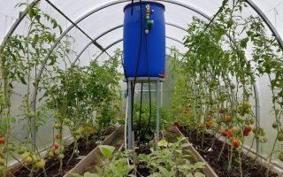 Как подвязывать помидоры в теплице из поликарбоната: способы