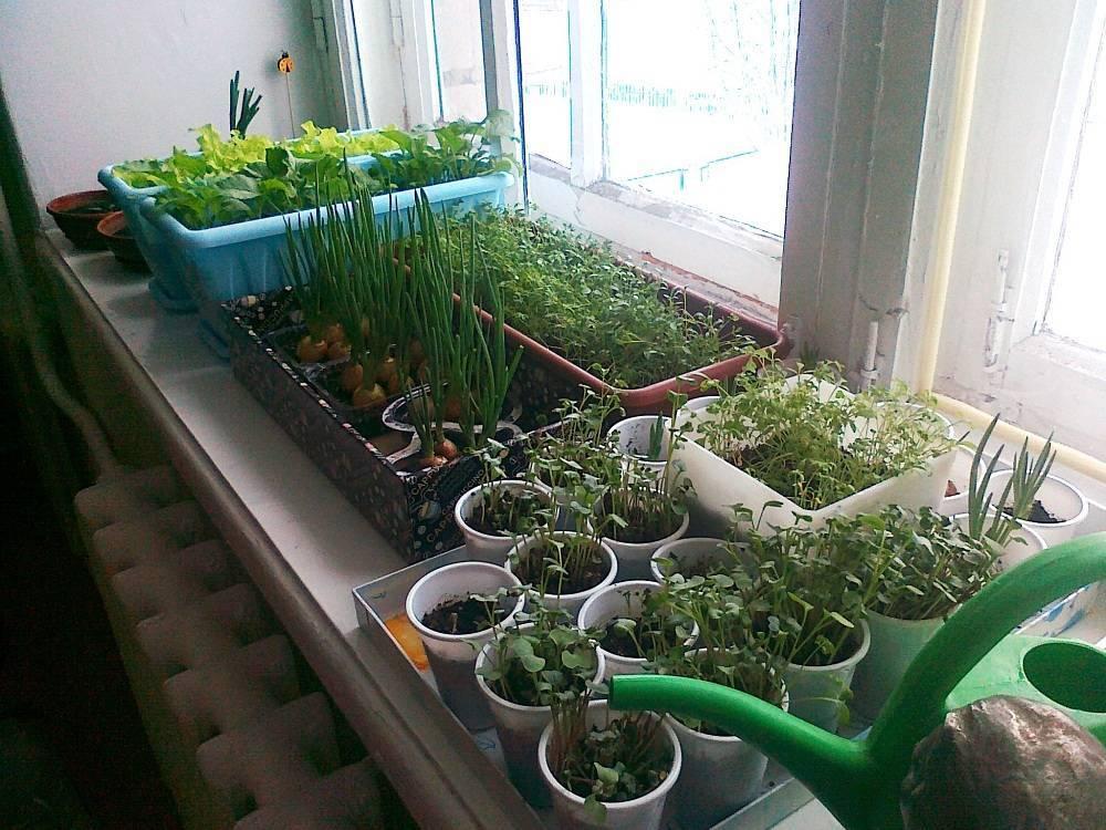 Как вырастить зелень на подоконнике в квартире: правила создания домашнего огорода