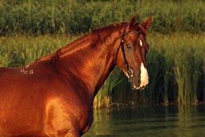 Как назвать лошадь: популярные клички