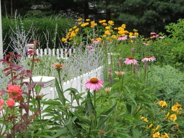 Гелиопсис: посадка и уход, фото садовых композиций гелиопсис: посадка и уход, фото садовых композиций
