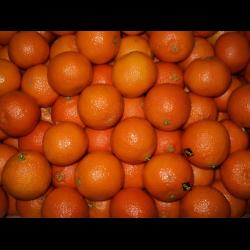 Марокканские мандарины как вырастить