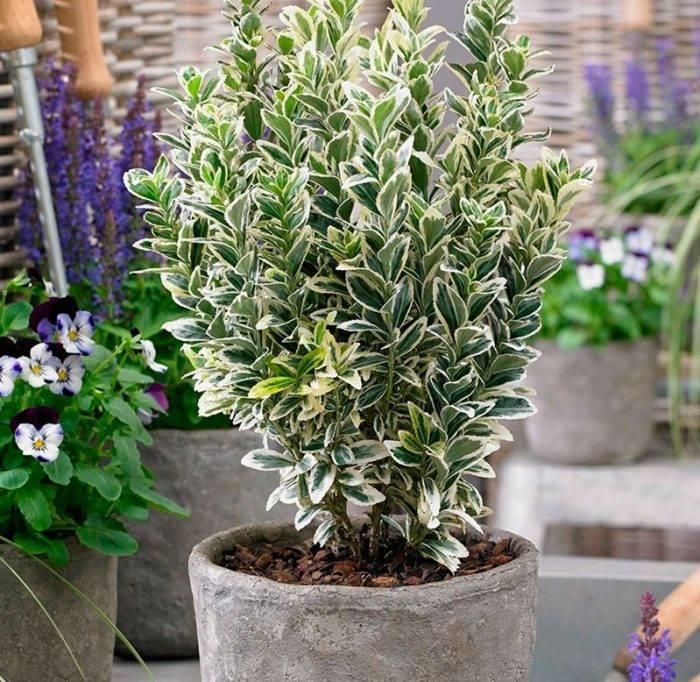 Декоративно-лиственные комнатные растения – каталог с фото и описаниями