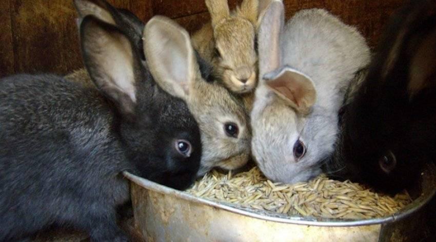 Как быстро откормить кроликов на мясо в домашних условиях