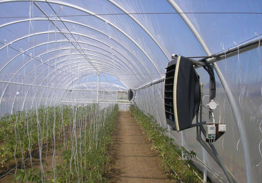 Температурный режим в теплице для помидоров: особенности и правила