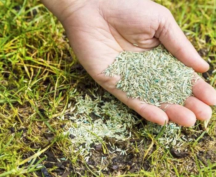 Посадка газонной травы: когда лучше сажать