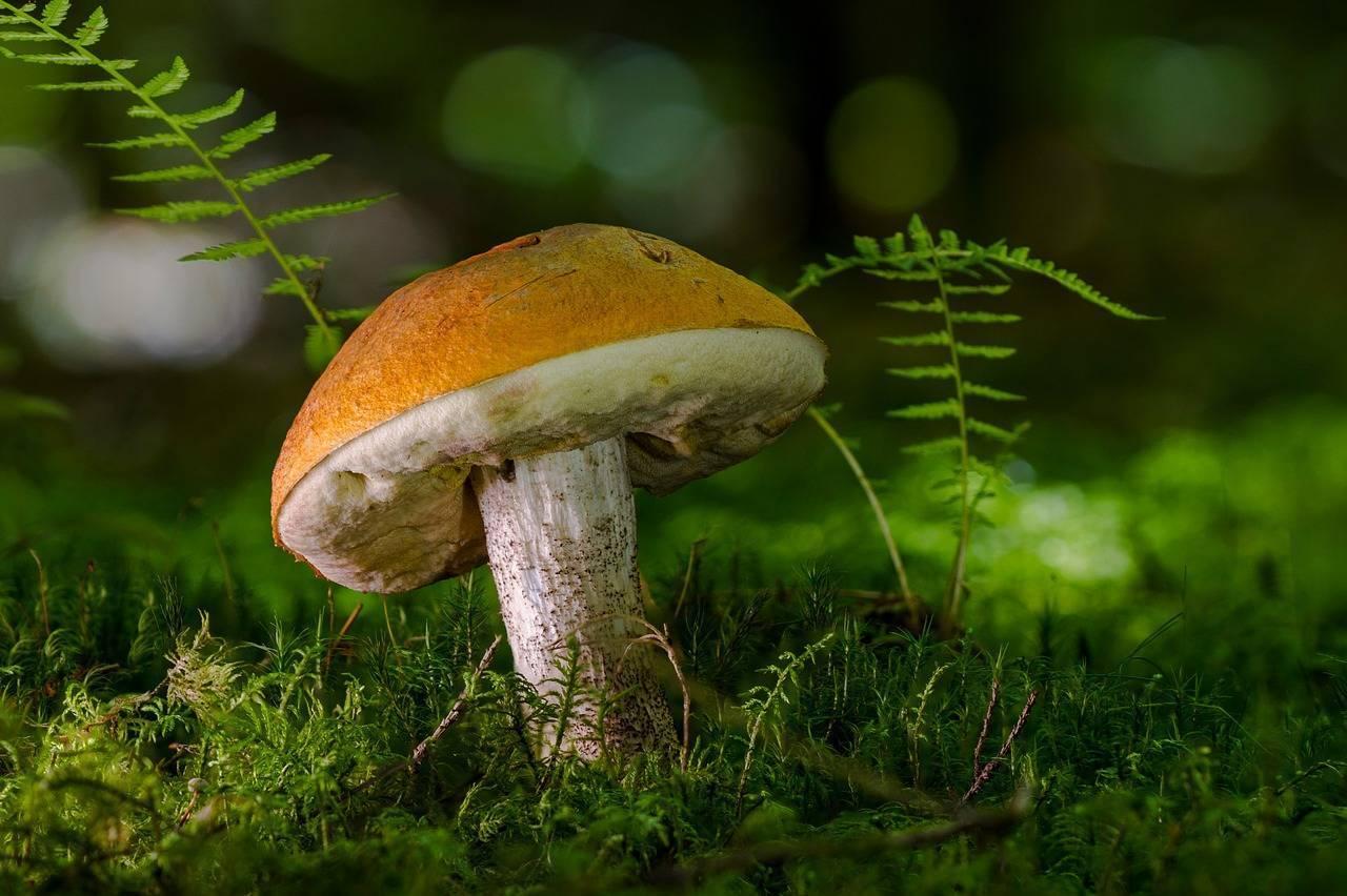 Самые грибные и ягодные места ленинградской области › новости санкт-петербурга › mr-7.ru