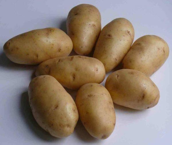 Картофель ласунок: характеристика и описание сорта, фото, отзывы