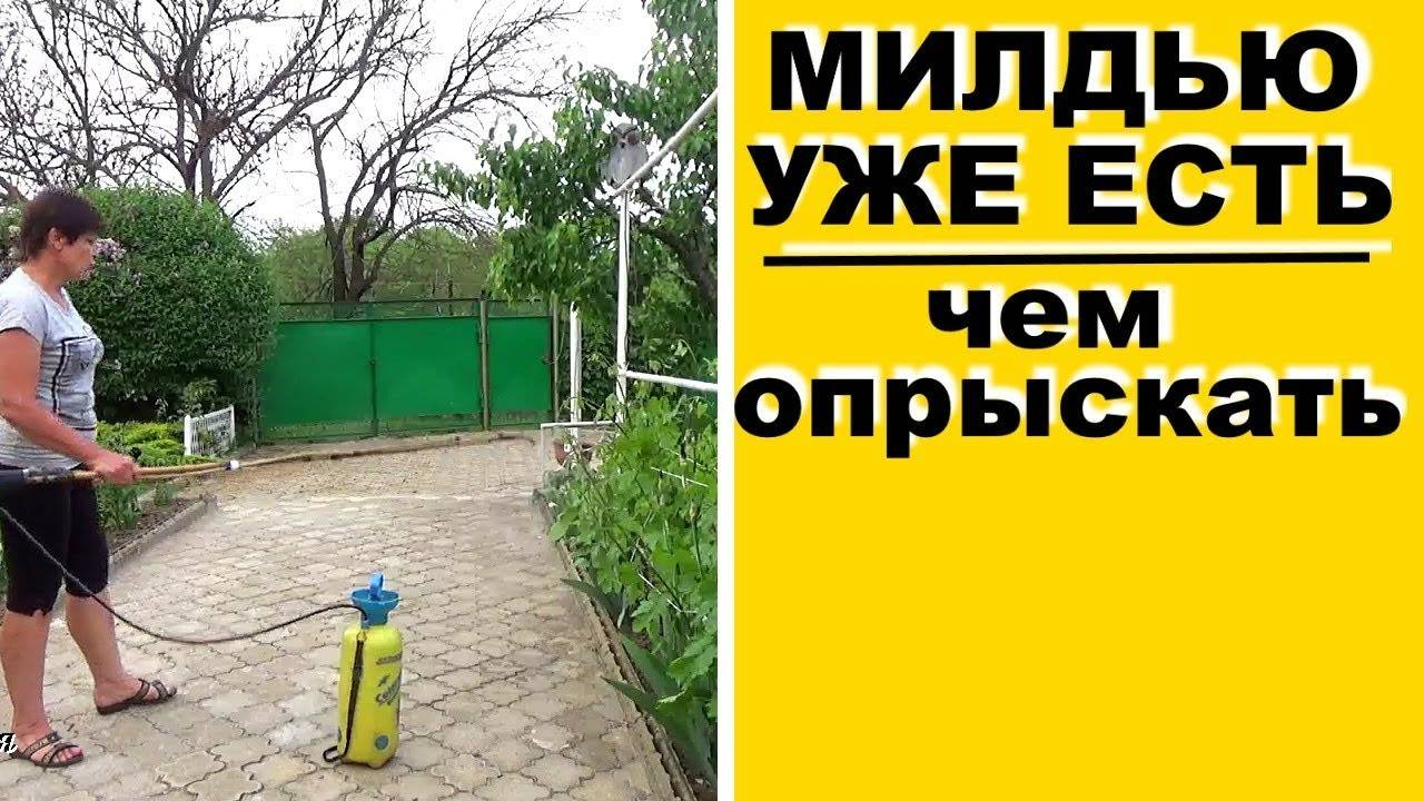 Курзат р, сп