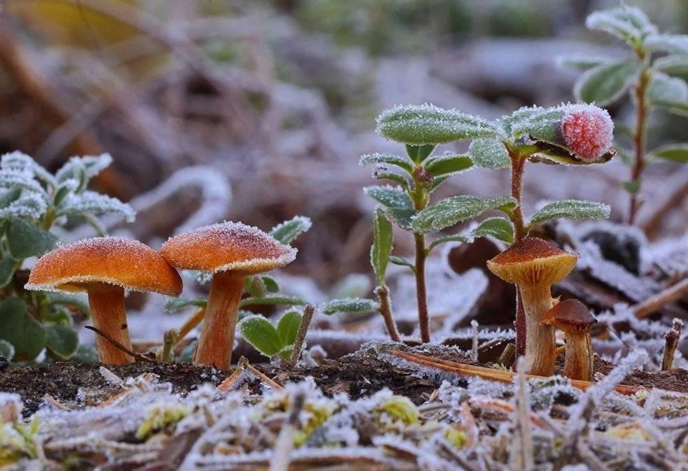 Где растут белые грибы и как их собирать