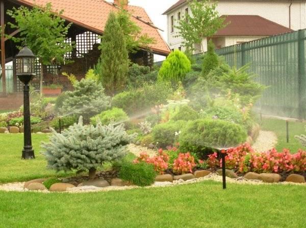 Выбираем вечнозеленые растения для сада
