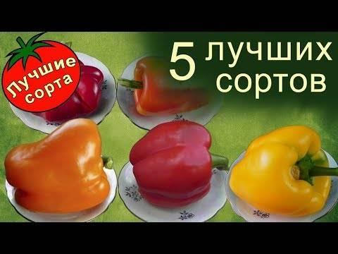 Ранние сорта перца для ленинградской области