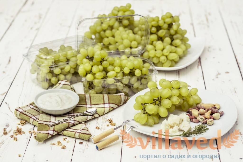 Мускатный виноград русбол: описание сорта с характеристикой и отзывами