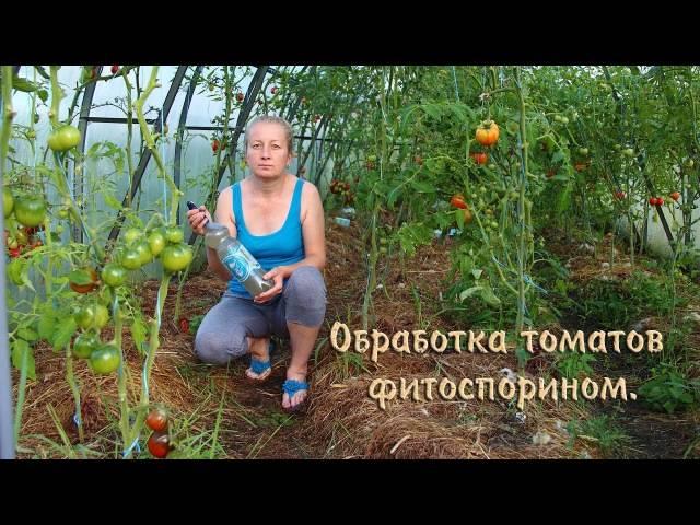 Фитоспорин для рассады томатов