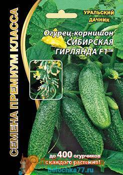 Огурец берендей f1: характеристика и описание сорта, выращивание и уход с фото
