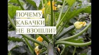 Сколько дней всходят кабачки: прорастание семян после посева — selok.info