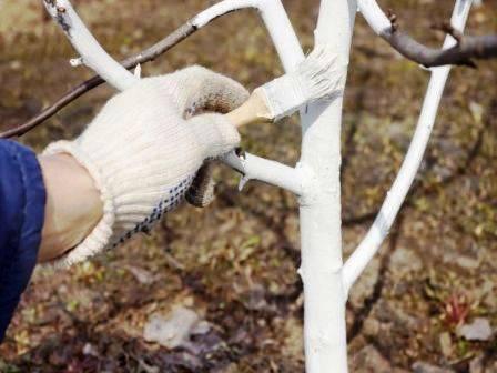 Особенности ухода за яблоней осенью и подготовки к зиме