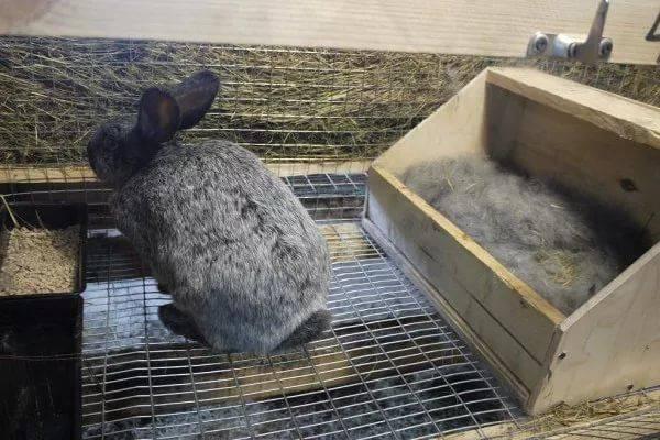 Развитие маленького крольчонка и уход за ним