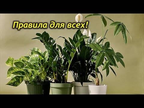 Топ-5 правил ухода за комнатными растениями