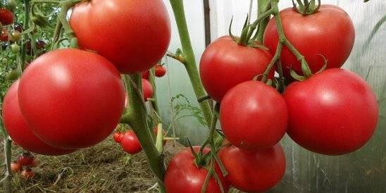 ✅ суперфосфат - инструкция по применению удобрения на огороде и в саду, состав, виды, дозировка