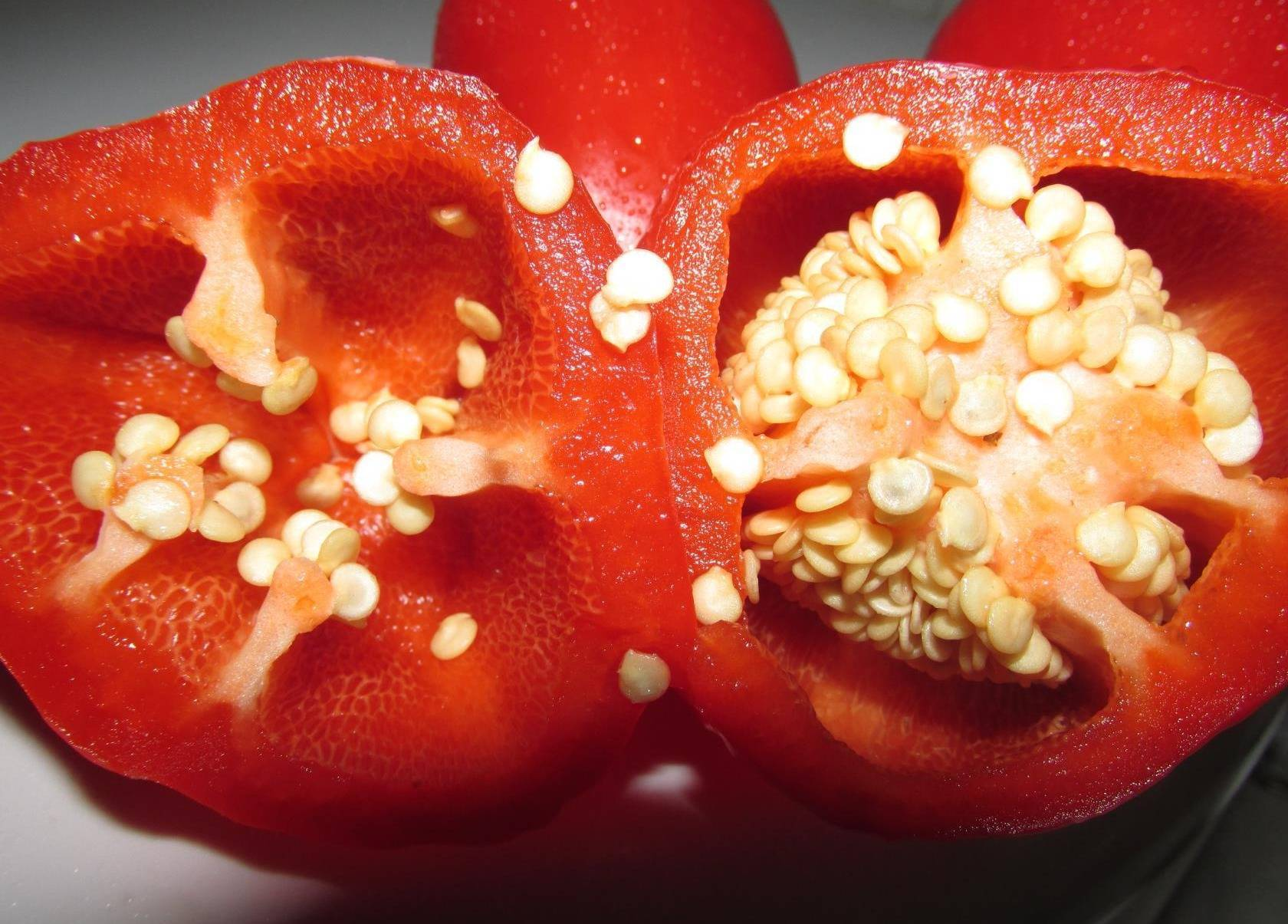✅ перец купец: описание, характеристика и урожайность, вкусовые качества сорта, фото - tehnoyug.com