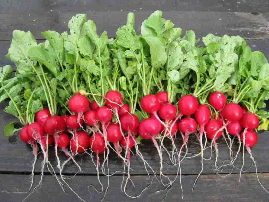 Вареная тыква: польза и вред, калорийность, бжу, ги, нормы потребления, особенности приема