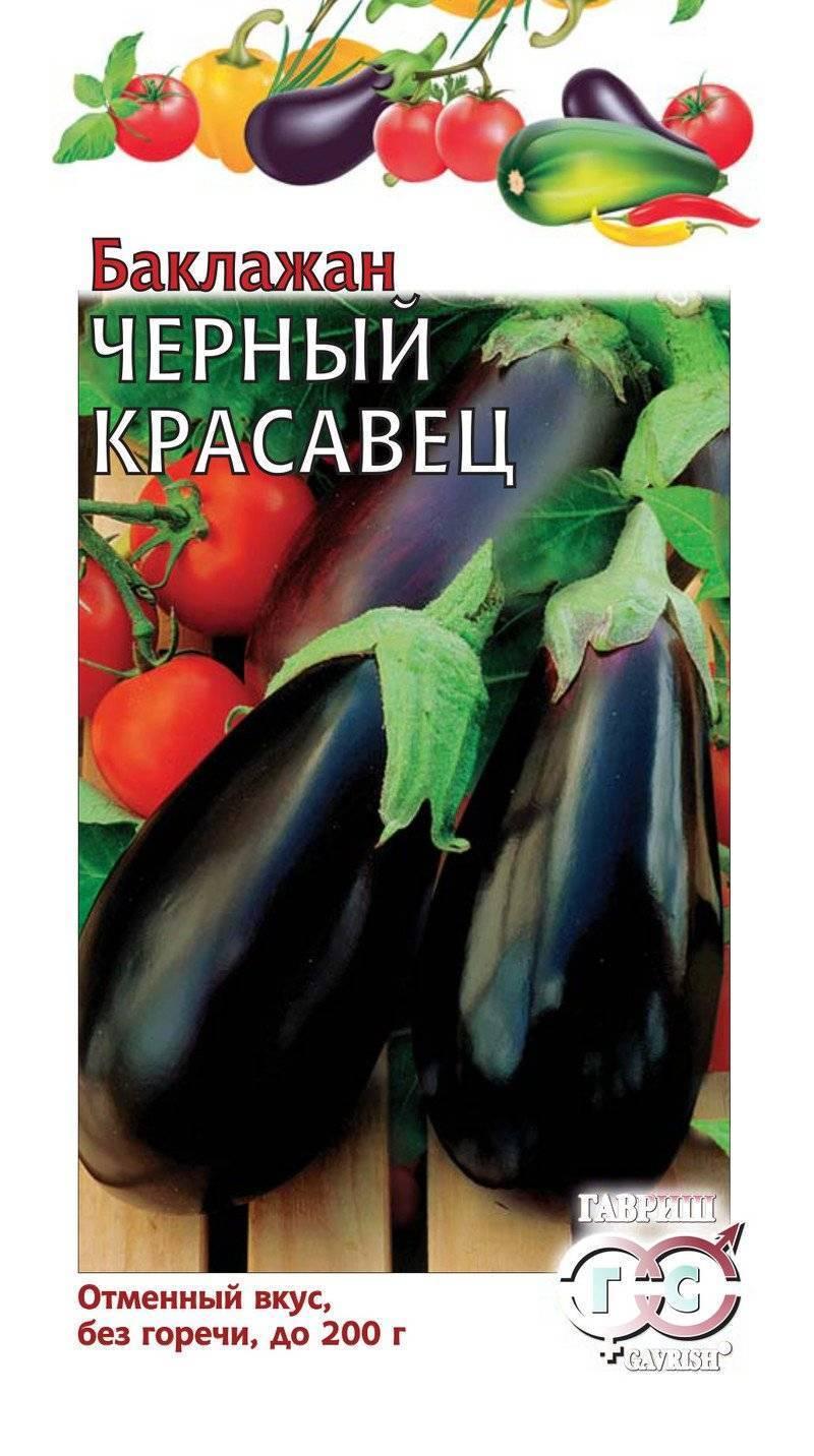 Баклажан черный красавец (блэк бьюти): характеристика и описание сорта, особенности выращивания и ухода, фото, отзывы