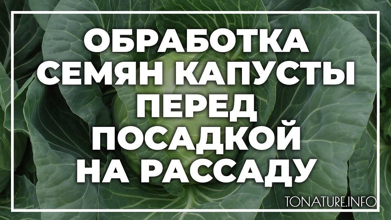 Выращивание рассады капусты в домашних условиях на supersadovnik.ru