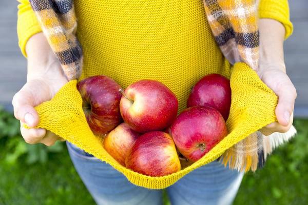 Приспособление для сбора яблок: устройство и советы по выбору