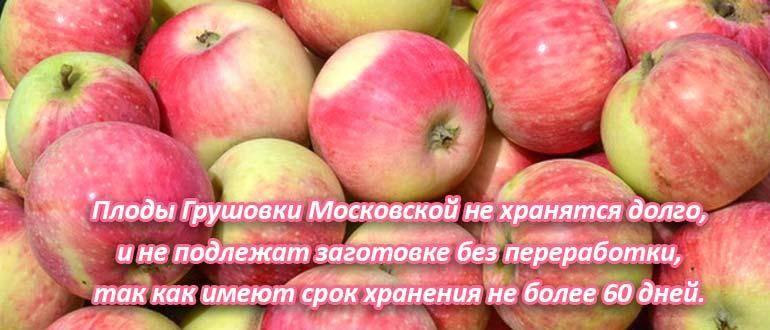 Яблоня грушовка московская – сорт  с 200-летней историей