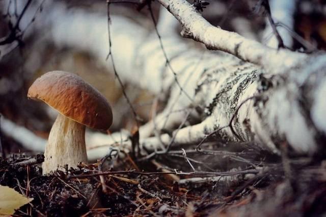 Технология выращивания грибов в огороде на даче и в подвале: фото, видео, как выращивать грибы