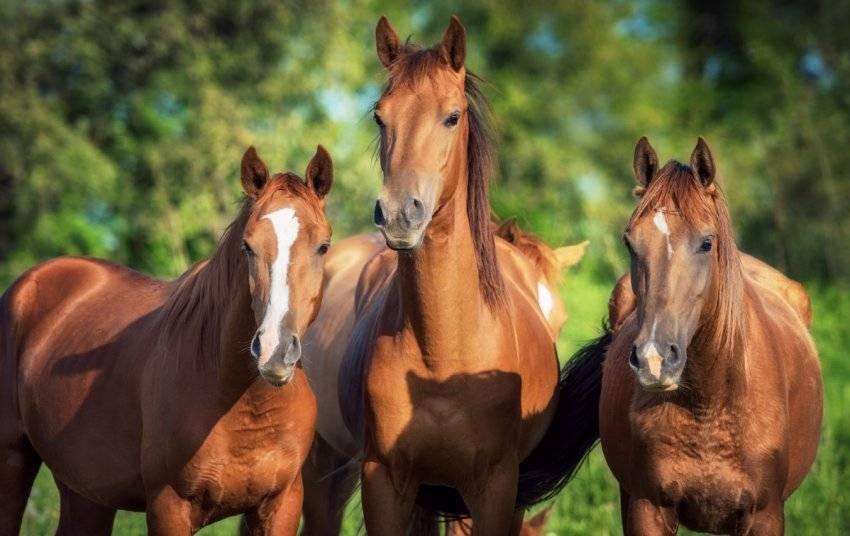 Сколько лет живет лошадь в домашних условиях и в дикой природе?
