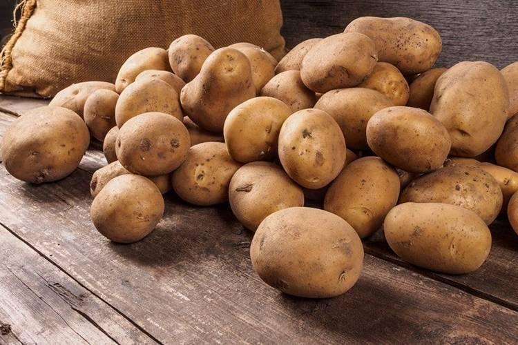 Парша на картофеле, как бороться? | во саду и в огороде