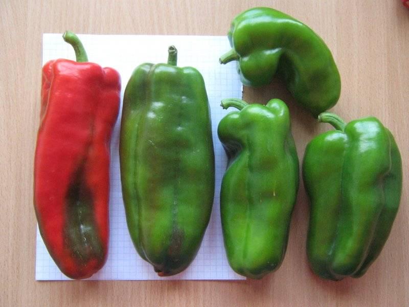 Выращивание сладкого перца в теплице > видео + фото как получить хороший урожай