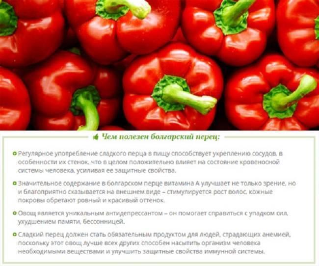Острый перец: когда сажать на рассаду в 2021 году, выращивания и уход