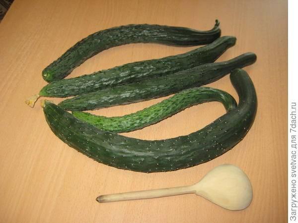 Описание и характеристики огурцов сорта изумрудный поток f1, урожайность и выращивание