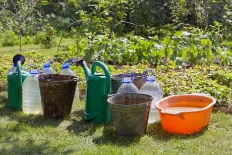Как поливать огурцы в открытом грунте: периодичность и способы